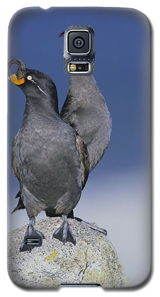 Crested Auklet Pair Galaxy S5 Case by Toshiji Fukuda