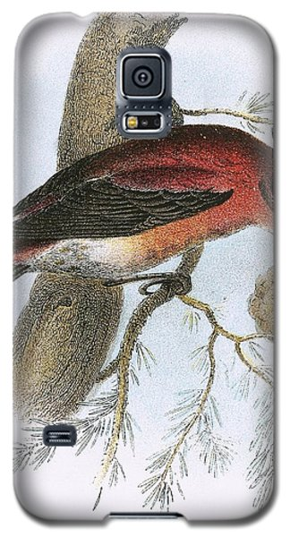 Crossbill Galaxy S5 Case by English School