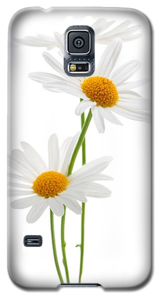 Daisies On White Background Galaxy S5 Case by Elena Elisseeva