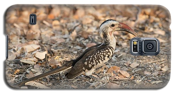 Damara Red-billed Hornbill Foraging Galaxy S5 Case by Tony Camacho