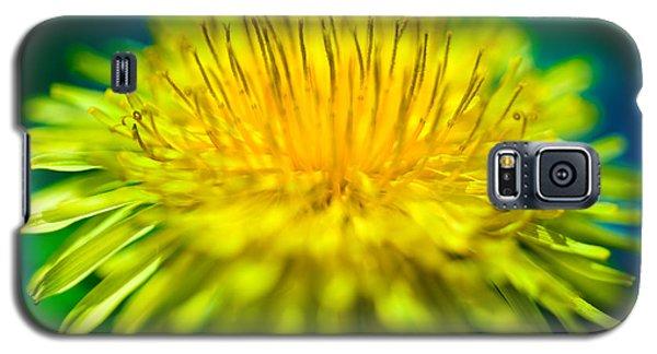 Yellow Galaxy S5 Cases - Dandelion Bloom  Galaxy S5 Case by Iris Richardson