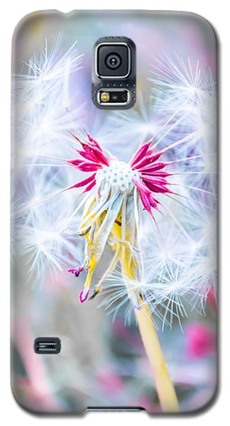 Galaxy S5 Cases - Pink Dandelion Galaxy S5 Case by Parker Cunningham