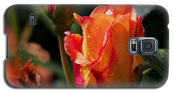Flower Galaxy S5 Cases - Early Roses Galaxy S5 Case by Rona Black