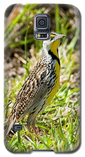 Eastern Meadowlark Galaxy S5 Case by Anthony Mercieca