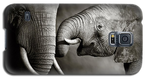 Elephant Affection Galaxy S5 Case by Johan Swanepoel
