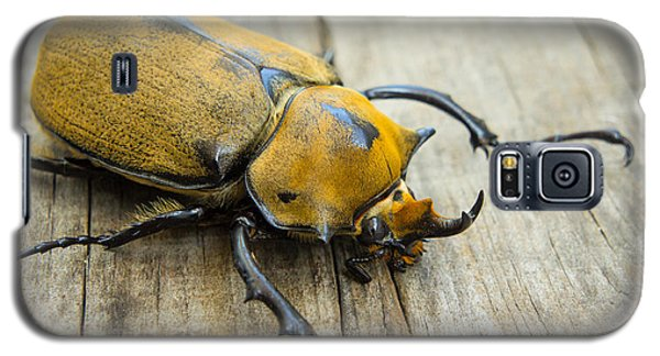 Elephant Beetle Galaxy S5 Case by Aged Pixel