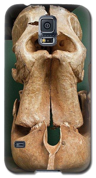 Elephant Skull Cyclops Fossil Myth Galaxy S5 Case by Paul D Stewart
