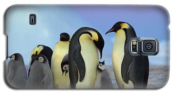 Emperor Penguin Parents And Chick Galaxy S5 Case by Frederique Olivier