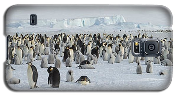 Emperor Penguins Aptenodytes Forsteri Galaxy S5 Case by Panoramic Images