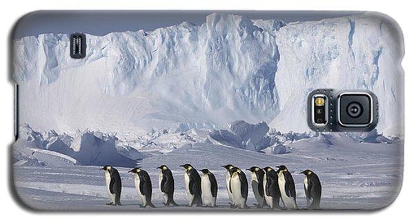 Emperor Penguins Walking Antarctica Galaxy S5 Case by Frederique Olivier