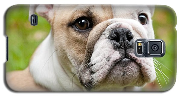 English Bulldog Puppy Galaxy S5 Case by Natalie Kinnear