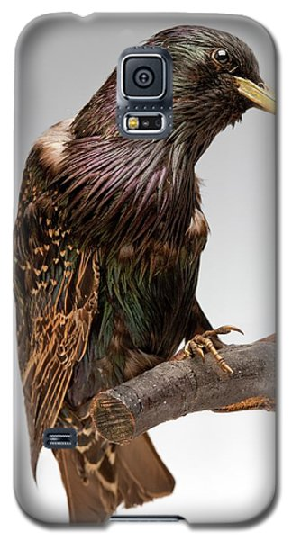 European Starling Galaxy S5 Case by Ucl, Grant Museum Of Zoology