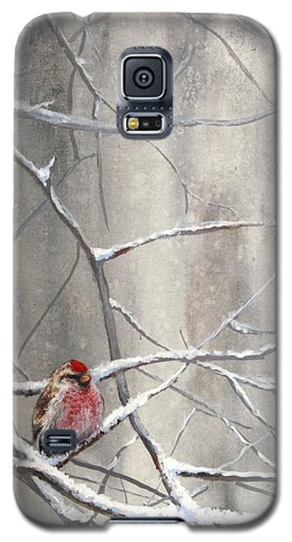 Eyeing The Feeder Alaskan Redpoll In Winter Galaxy S5 Case by Karen Whitworth