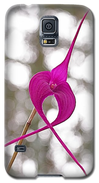 First Prize Galaxy S5 Case by Rona Black