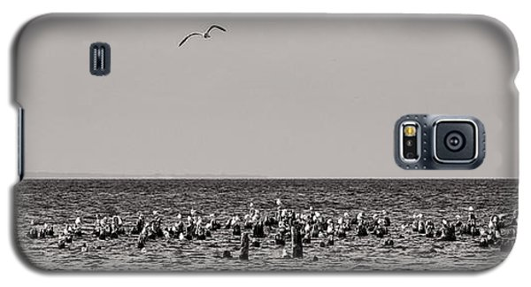 Flock Of Seagulls In Black And White Galaxy S5 Case by Sebastian Musial
