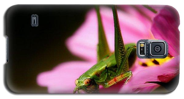 Flower Hopper Galaxy S5 Case by Michael Eingle