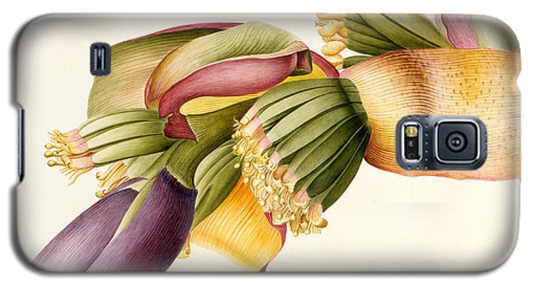 Flower Of The Banana Tree  Galaxy S5 Case by Georg Dionysius Ehret