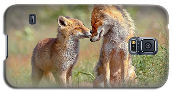Fox Felicity - Mother And Fox Kit Showing Love And Affection Galaxy S5 Case by Roeselien Raimond