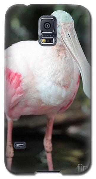 Friendly Spoonbill Galaxy S5 Case by Carol Groenen