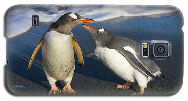 Gentoo Penguin Chick Begging For Food Galaxy S5 Case by Yva Momatiuk and John Eastcott