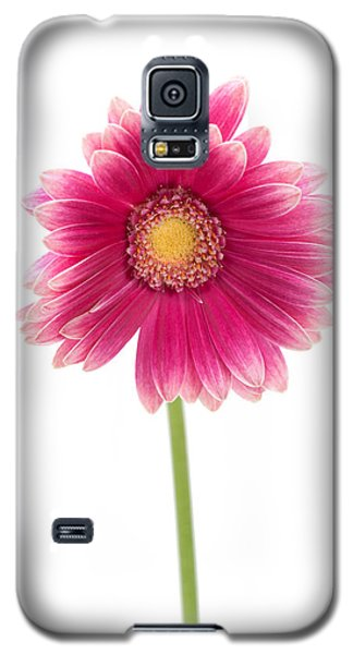 Gerbera Galaxy S5 Case by Sebastian Musial