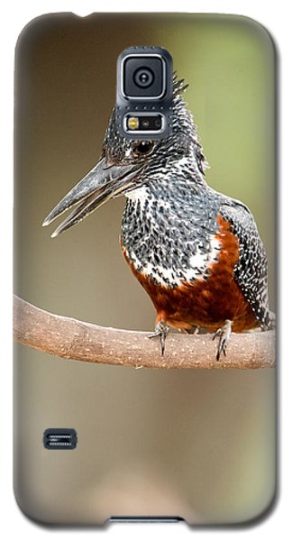 Giant Kingfisher Megaceryle Maxima Galaxy S5 Case by Panoramic Images