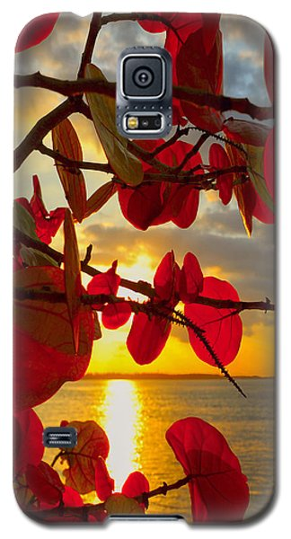 Plant Galaxy S5 Cases - Glowing Red Galaxy S5 Case by Stephen Anderson