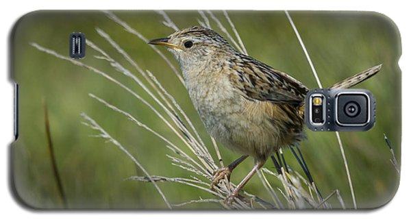 Grass Wren Galaxy S5 Case by John Shaw
