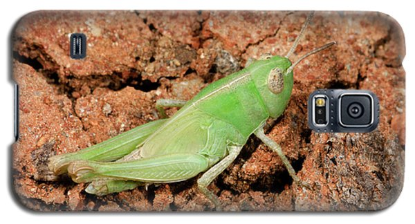 Grasshopper Aiolopus Strepens Nymph Galaxy S5 Case by Nigel Downer