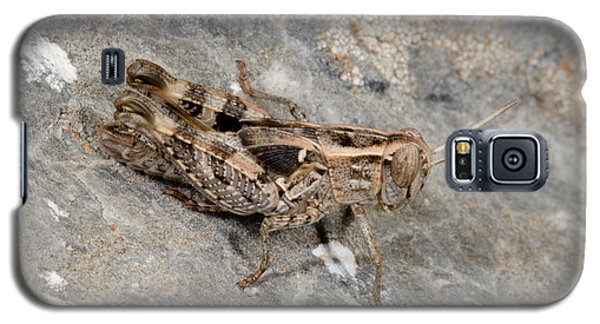 Grasshopper Calliptamus Barbarus Juvenile Galaxy S5 Case by Nigel Downer