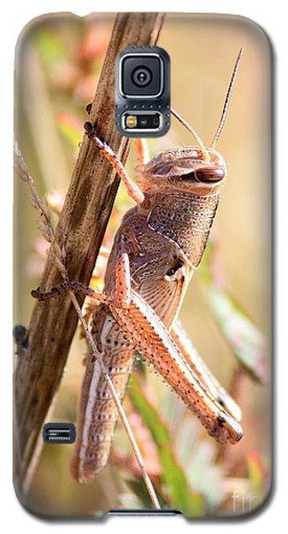 Grasshopper In The Marsh Galaxy S5 Case by Carol Groenen