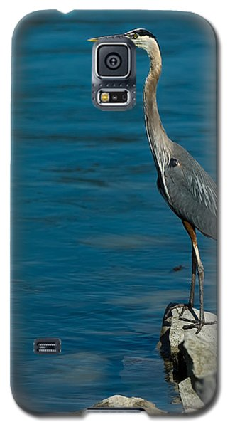 Great Blue Heron Galaxy S5 Case by Sebastian Musial