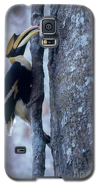 Great Hornbill Galaxy S5 Case by Art Wolfe