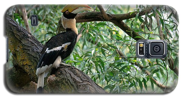 Great Indian Hornbill Galaxy S5 Case by Art Wolfe