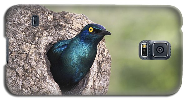 Greater Blue-eared Glossy-starling Galaxy S5 Case by Andrew Schoeman