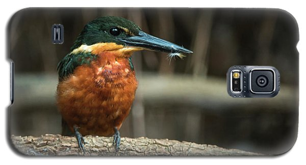 Green And Rufous Kingfisher Galaxy S5 Case by Pete Oxford