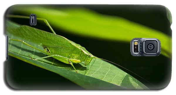 Green Katydid Galaxy S5 Case by Christina Rollo