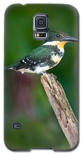 Green Kingfisher Chloroceryle Galaxy S5 Case by Panoramic Images