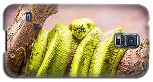 Green Tree Python Galaxy S5 Case by Pati Photography
