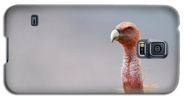 Griffon Vulture Galaxy S5 Case by Dr P. Marazzi