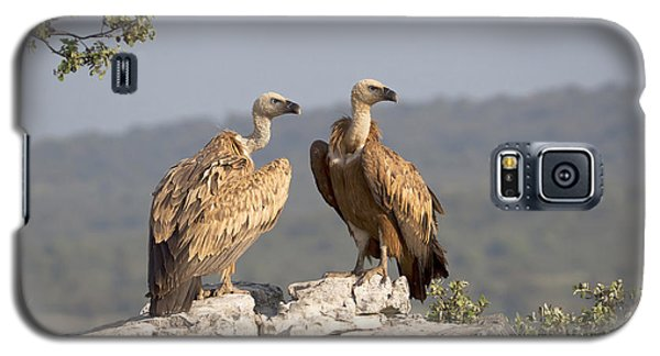 Griffon Vulture Pair Extremadura Spain Galaxy S5 Case by Gerard de Hoog