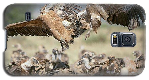 Griffon Vultures Galaxy S5 Case by Nicolas Reusens