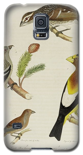Grosbeak And Crossbill Galaxy S5 Case by British Library