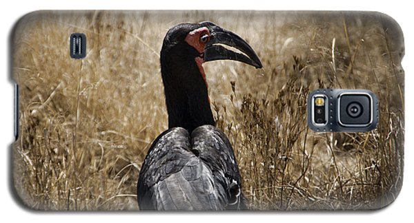 Ground Hornbill-africa Galaxy S5 Case by Douglas Barnard