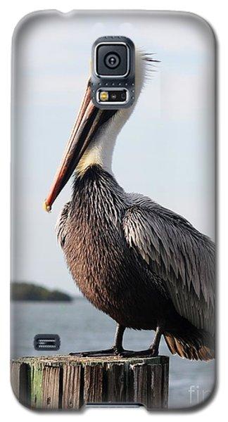 Handsome Brown Pelican Galaxy S5 Case by Carol Groenen