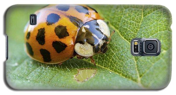 Harlequin Ladybird Galaxy S5 Case by Heath Mcdonald