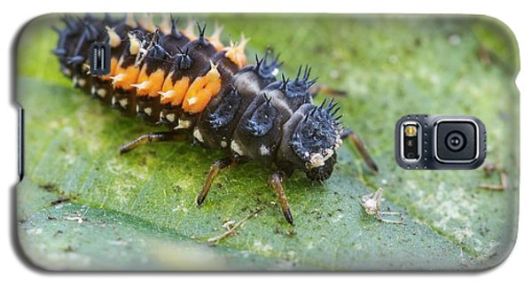 Harlequin Ladybird Larva Galaxy S5 Case by Heath Mcdonald