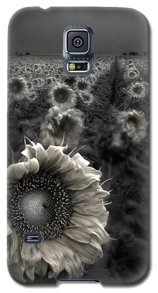 Galaxy S5 Cases - Haunting Sunflower fields 1 Galaxy S5 Case by Dave Dilli