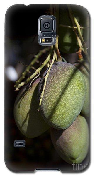 Hawaiian Mango Kihei Maui Hawaii Galaxy S5 Case by Sharon Mau