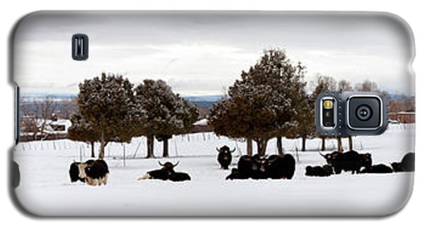 Herd Of Yaks Bos Grunniens On Snow Galaxy S5 Case by Panoramic Images